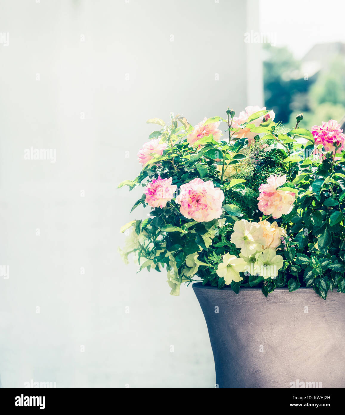 Schone Terrasse Topf Mit Rosen Und Petunien Die Blumen Auf Dem