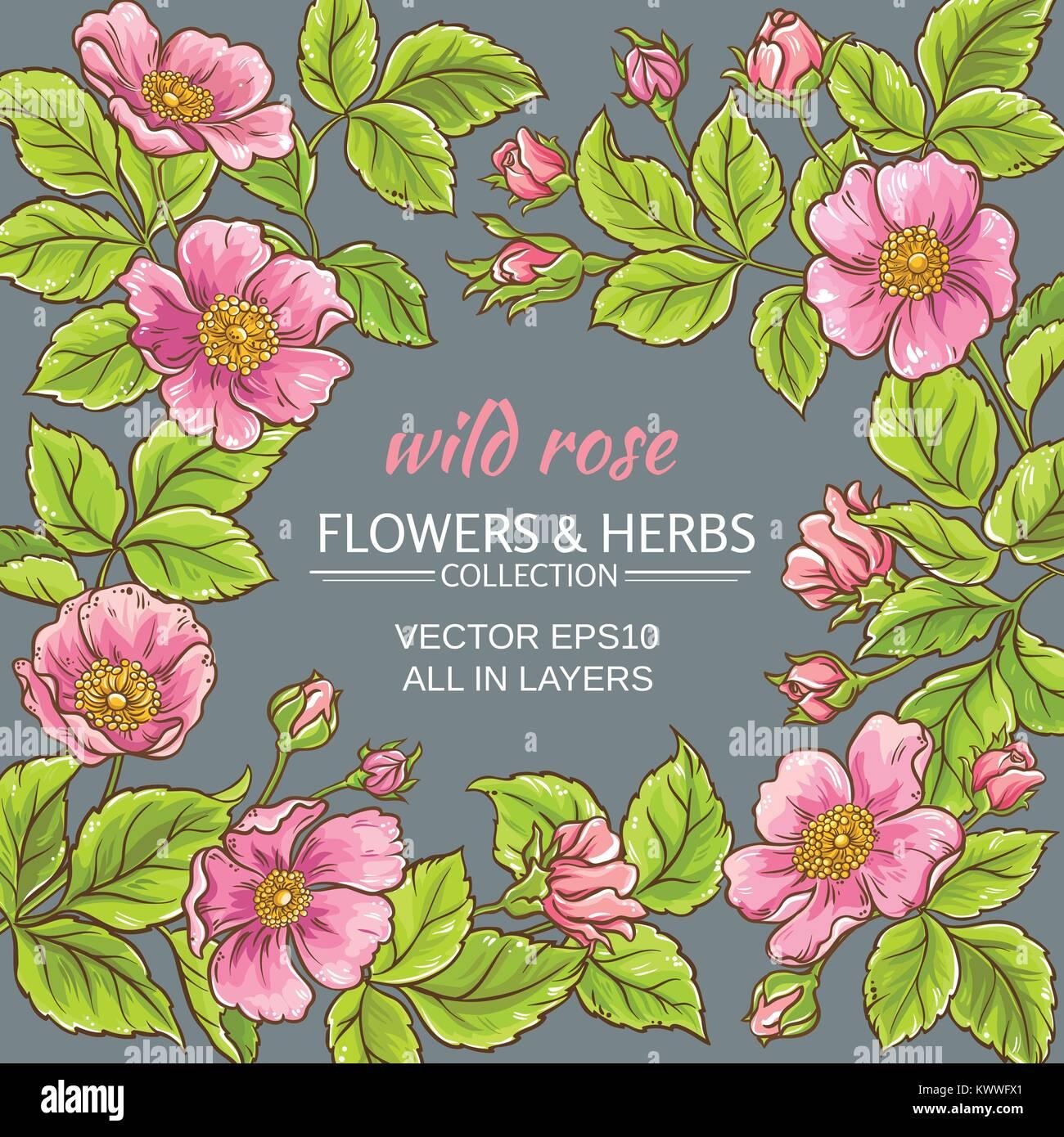 Wild Rose Blumen Rahmen auf farbigen Hintergrund Vektor Abbildung ...