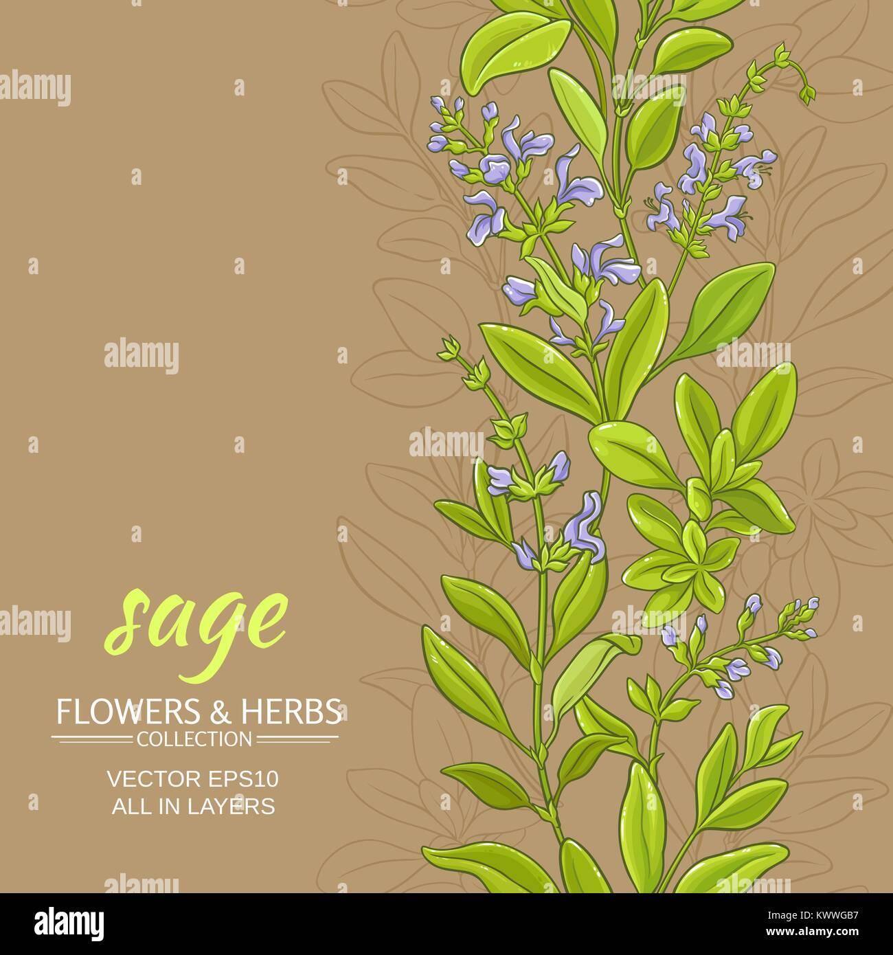 Salbei Pflanze Vektor Muster Auf Farbe Hintergrund Vektor Abbildung