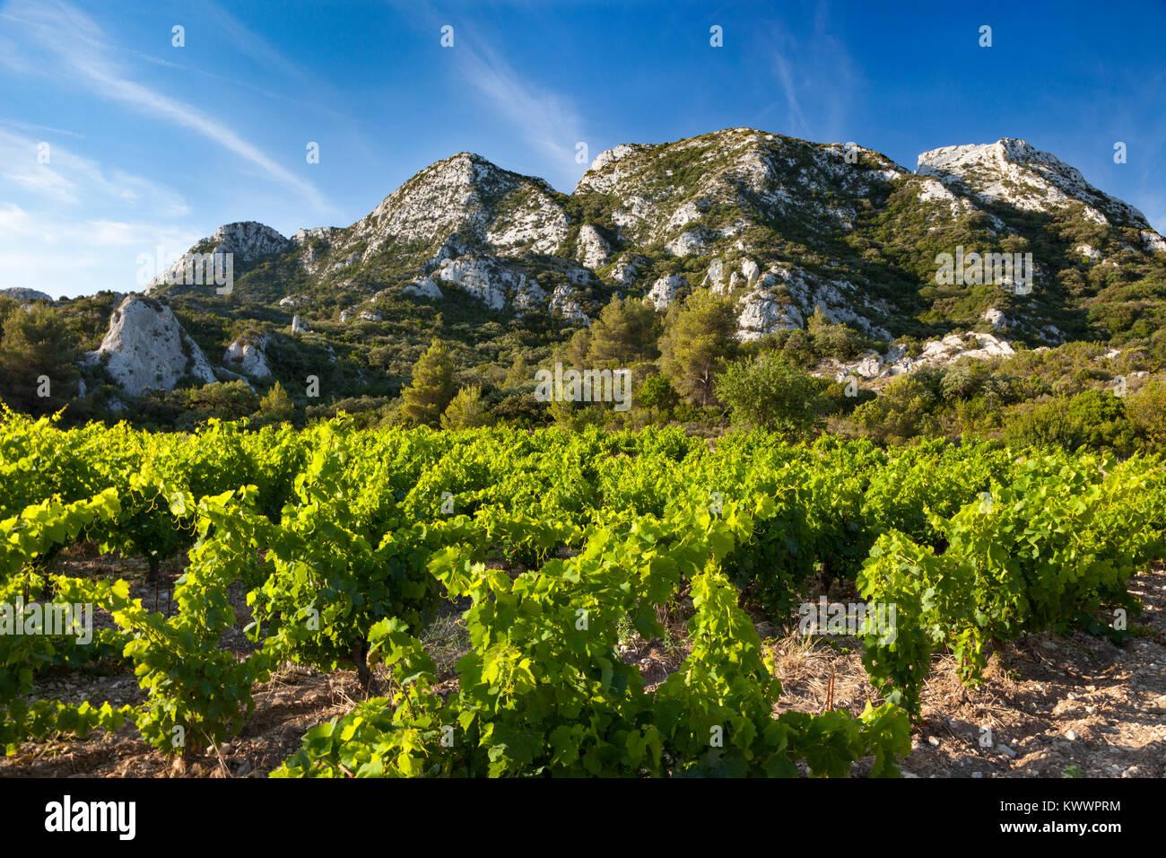 Berge der Provence mit Blick auf die Weinberge von Chateau Romanin in der Nähe von Saint Remy de Provence, Stockbild
