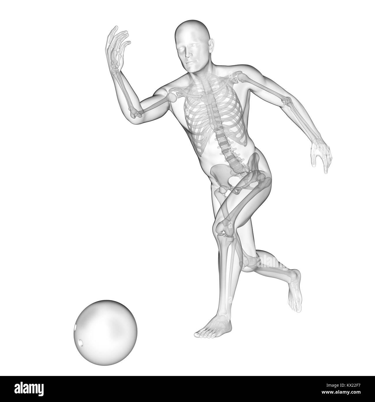 Großzügig Weibliche Skelett Struktur Ideen - Menschliche Anatomie ...