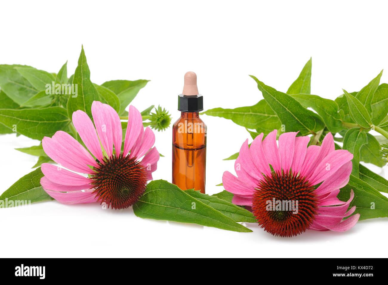 Flasche mit Echinacea Essenz Öl isoliert auf weißem Stockbild