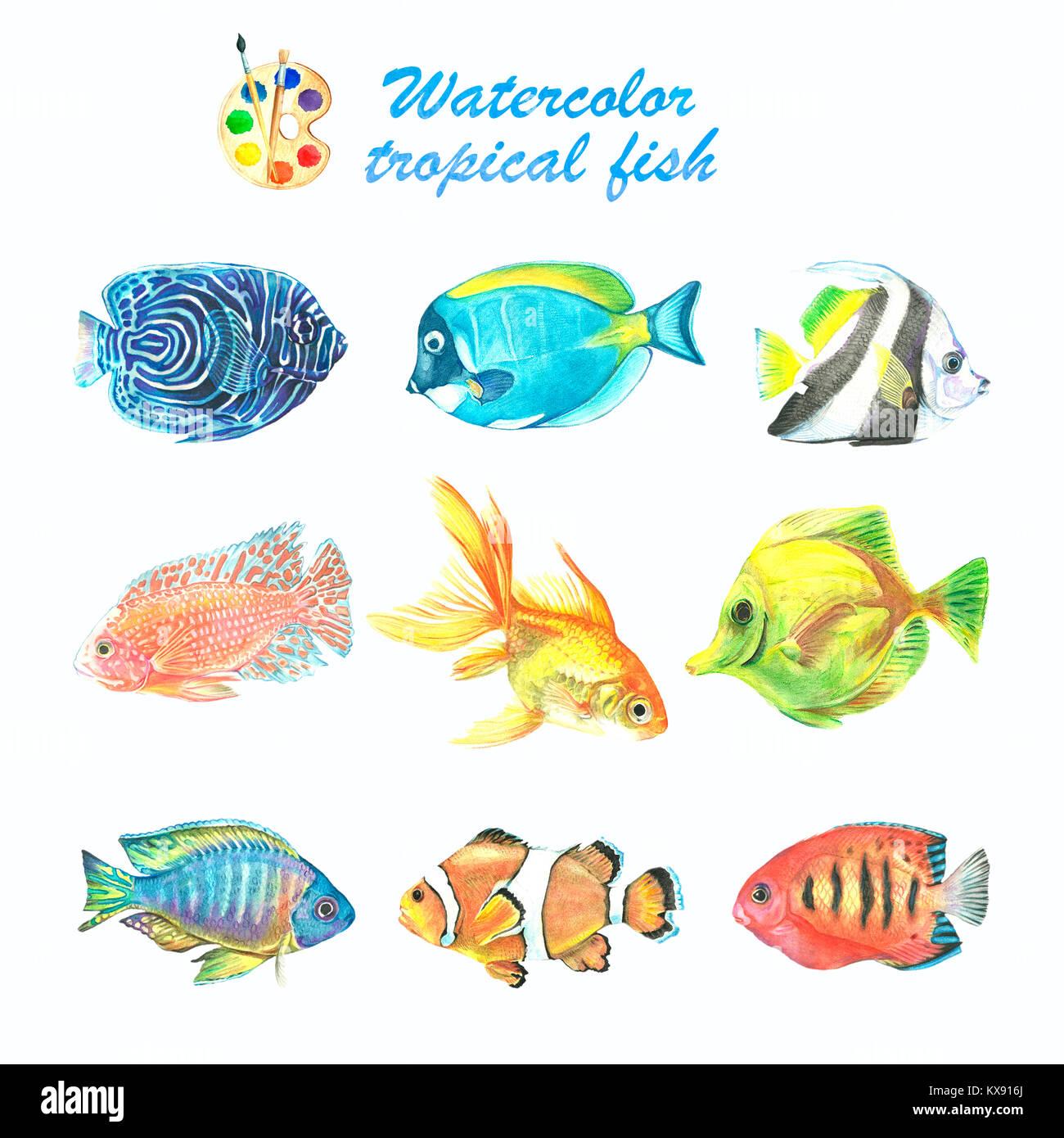 Atemberaubend Tropische Fische Färbung Seite Zeitgenössisch - Entry ...