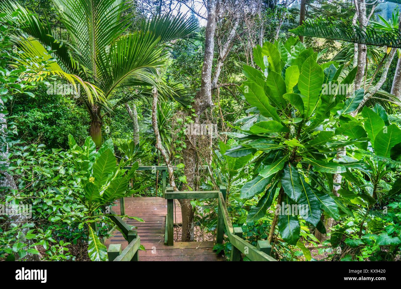 Norfolk Island, Australische externe Gebiet, üppigen Regenwald Vegetation an der Norfolk Insel Botanischer Stockbild
