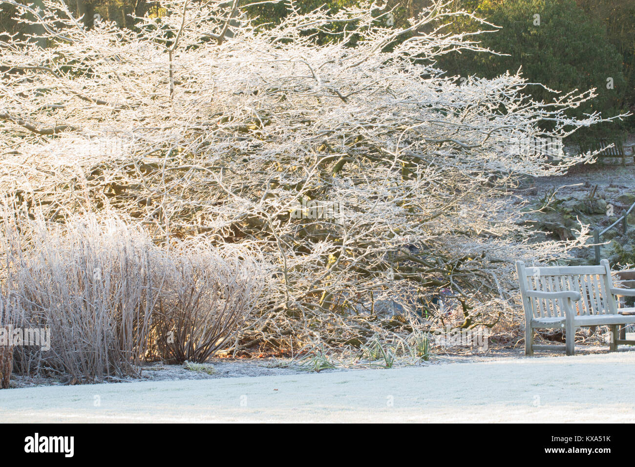 Winter Garden Uk Frost Stockfotos & Winter Garden Uk Frost Bilder ...