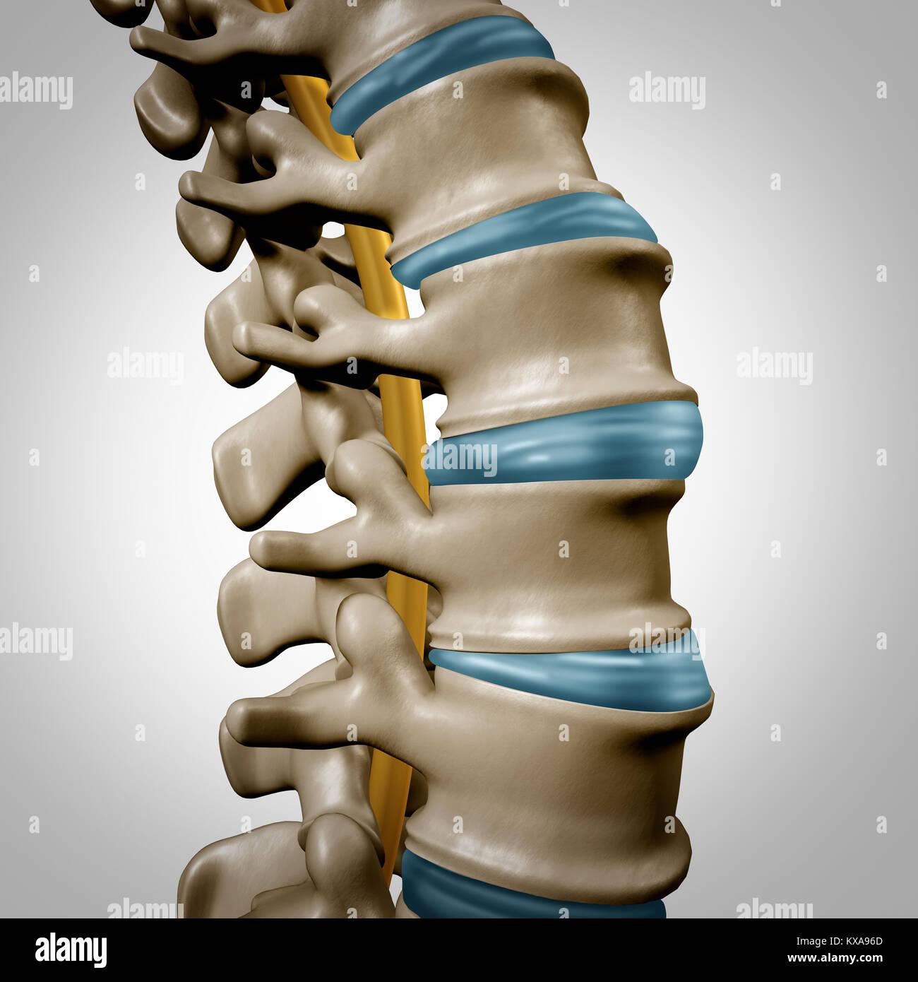 Die menschliche Anatomie der Wirbelsäule und Rückenmark Konzept wie ...