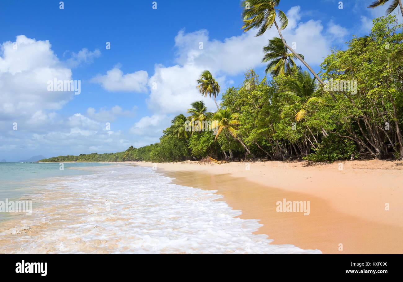 Die karibischen Strand, Martinique Insel. Stockbild