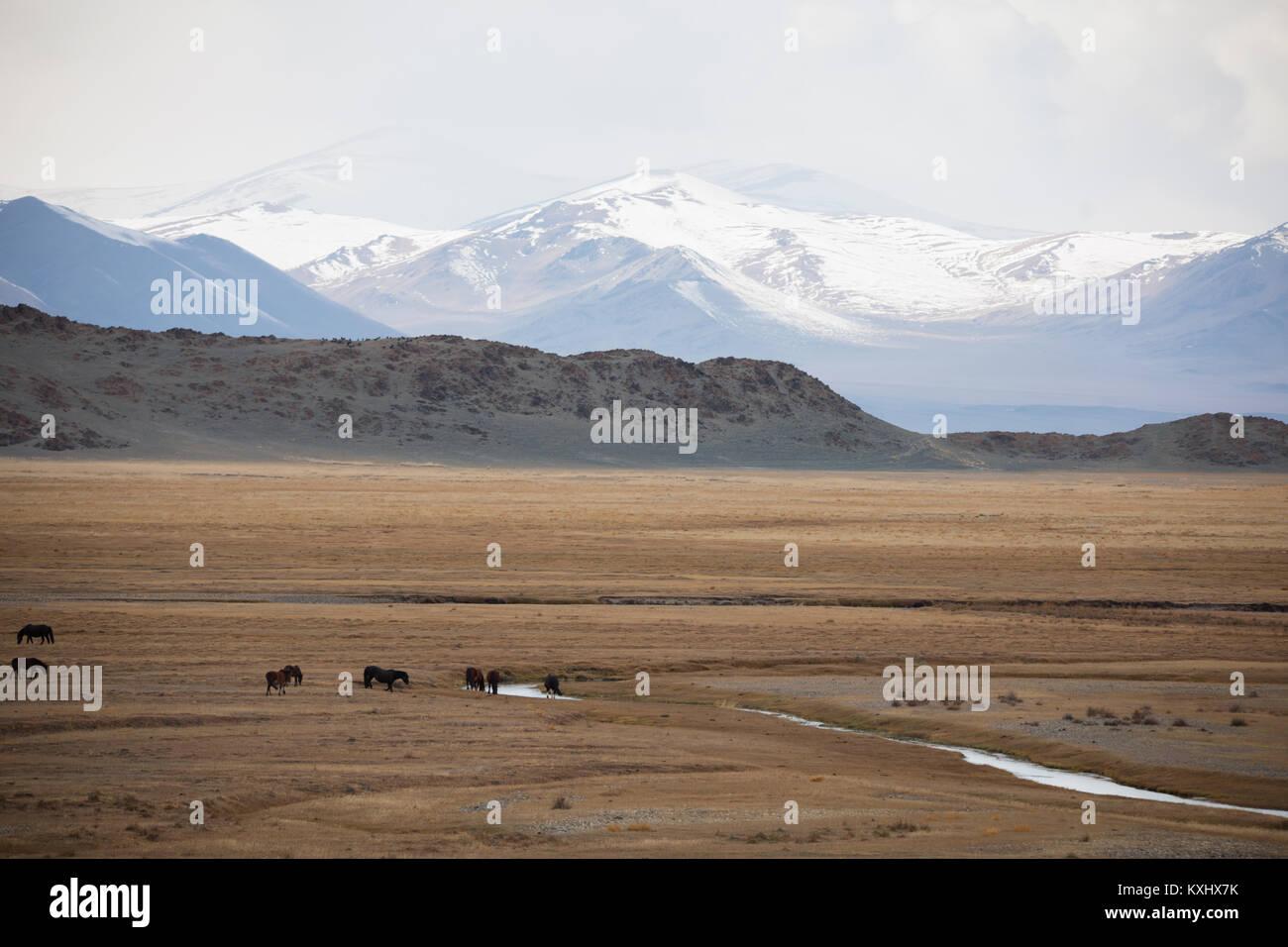 Mongolische Landschaft verschneite Berge Schnee Winter wilde Pferde trinken vom Fluss der Mongolei Stockbild