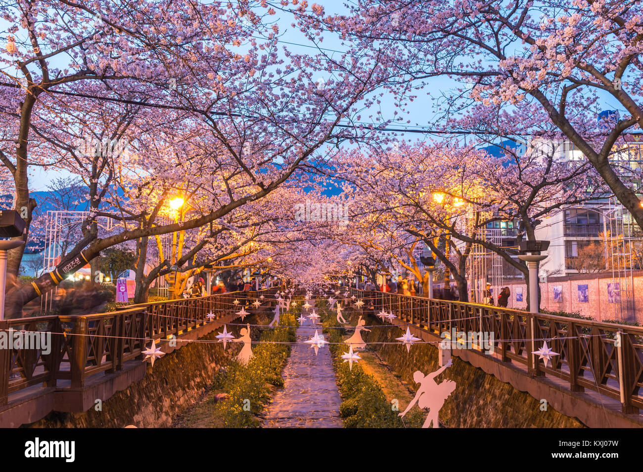 Feder Cherry Blossom Festival in der Yeojwacheon Stream bei Nacht, Jinhae, Südkorea Stockbild