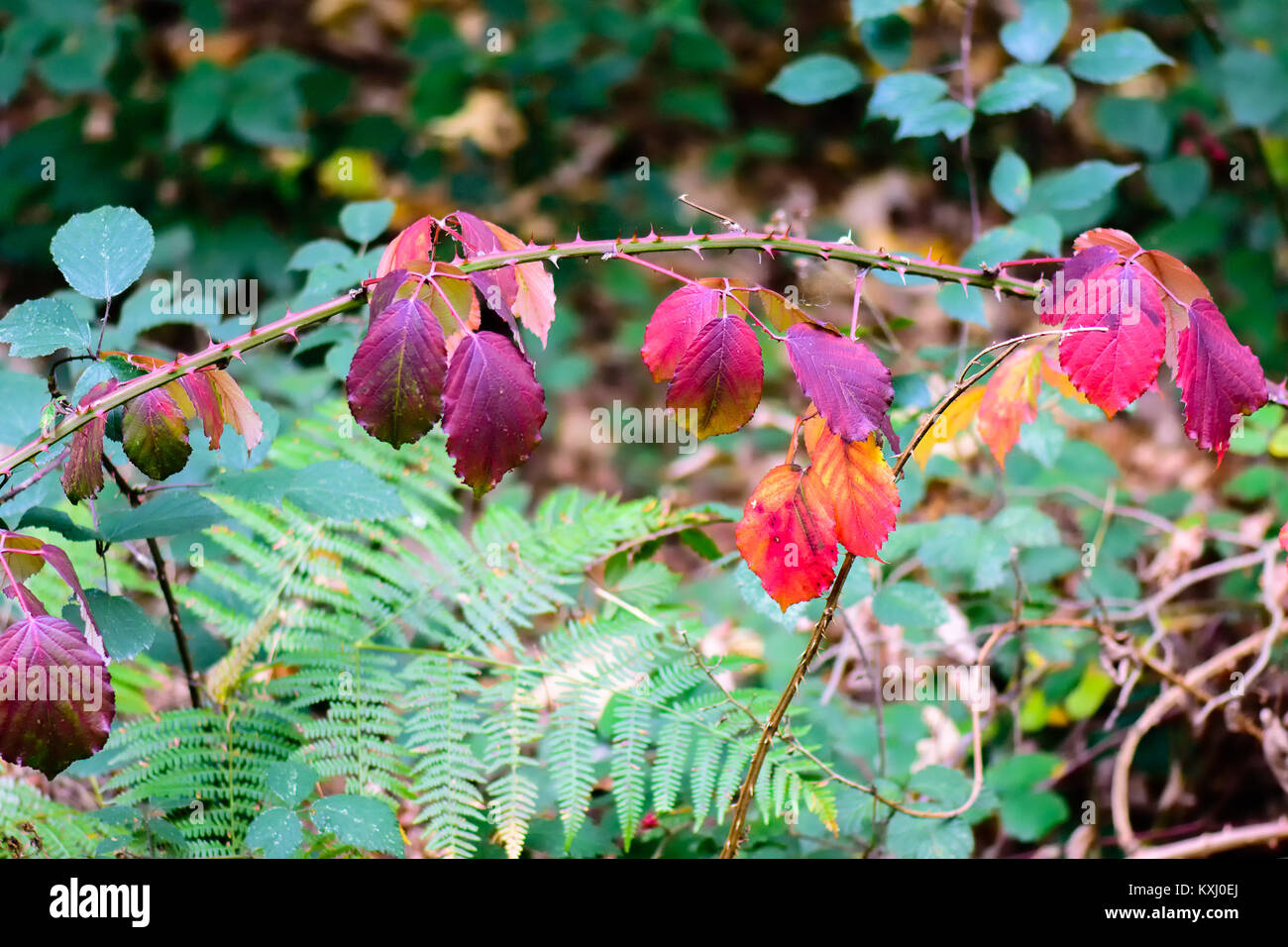 Violet Yellow Leaves Stockfotos & Violet Yellow Leaves Bilder - Alamy