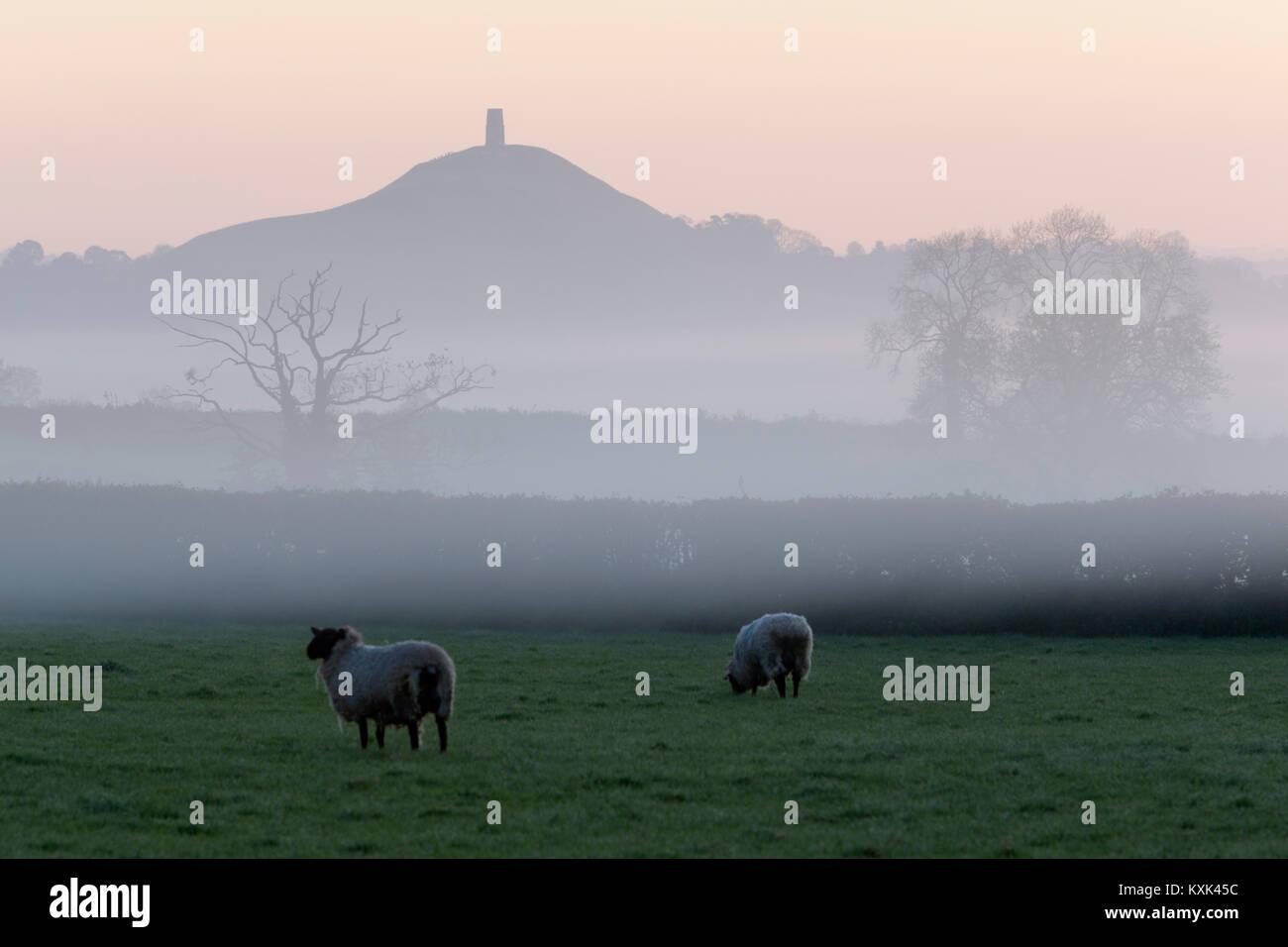 Glastonbury Tor in der Morgendämmerung Nebel, Glastonbury, Somerset, England, Vereinigtes Königreich, Stockbild