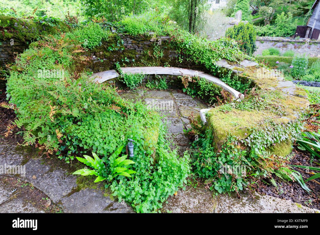 Moos, Farnen Und Glockenblumen Fallenden Stein Wand Eine Schattige  Kreisförmigen Sitzbereich Im Garten Haus, Buckland Monachorum, Devon, UK  Surround