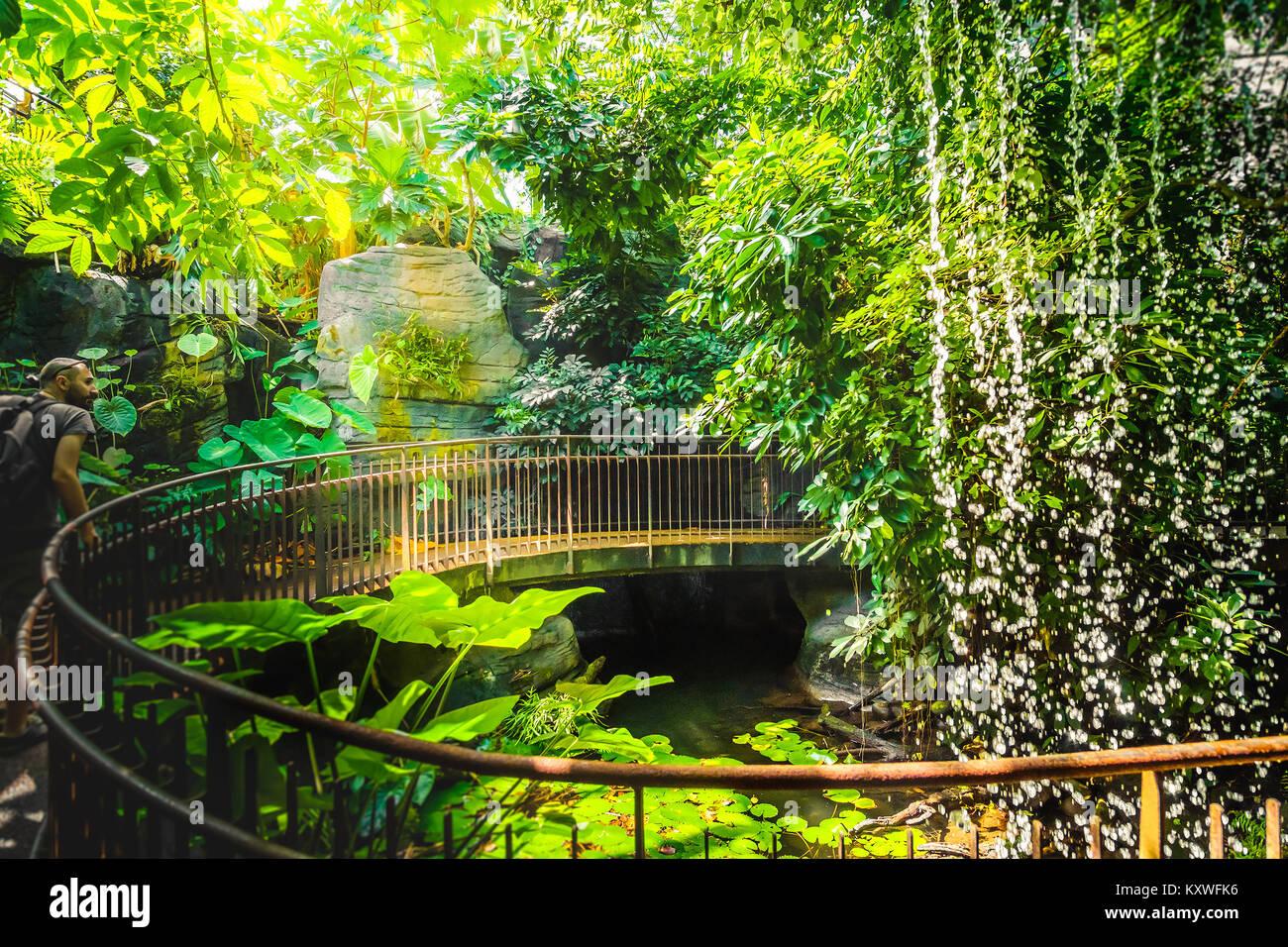 Tiefen Dschungel Wasserfall Abenteurer mann Explorer künstliche Geländer Stockbild