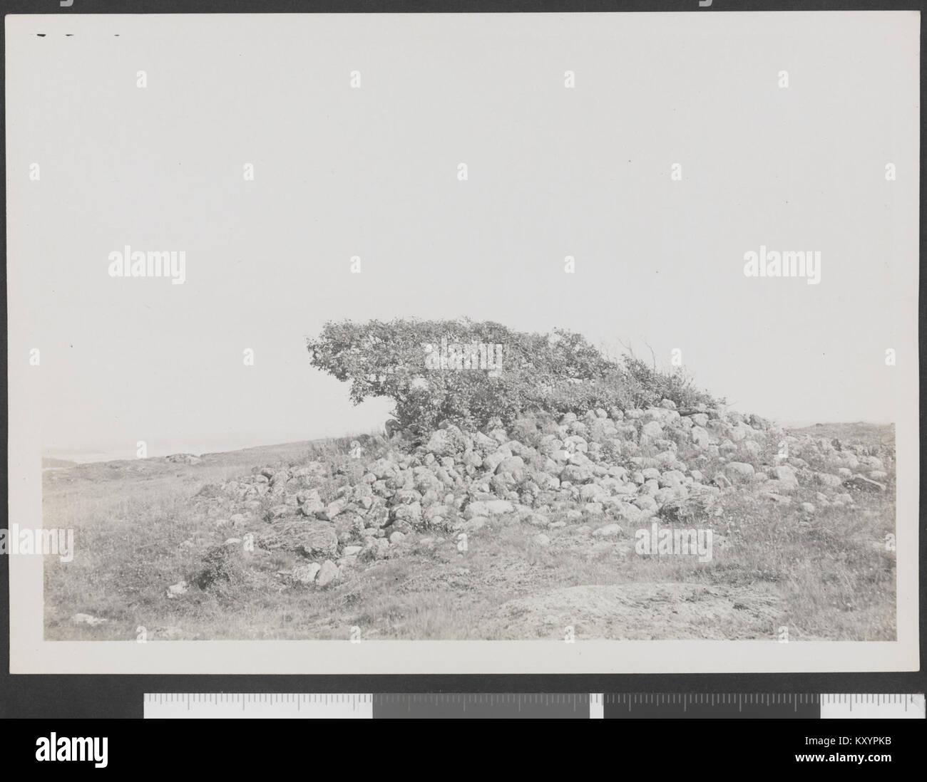 Heg, Prunus padus, på kjaempehaug paa N. Sletten-no-nb DigiFoto-Maker 20150930 00294 bldsa HRH 01 358 Stockbild