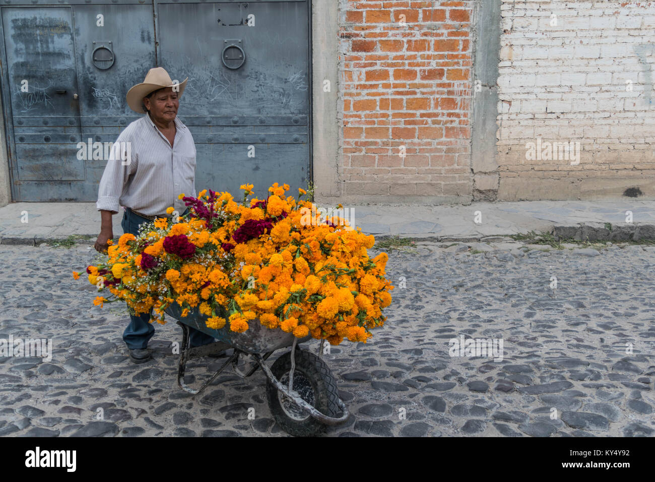 Mann in einem Strohhut drücken eine Schubkarre voll von orange, gelb und rot Ringelblumen, auf einer Straße Stockbild