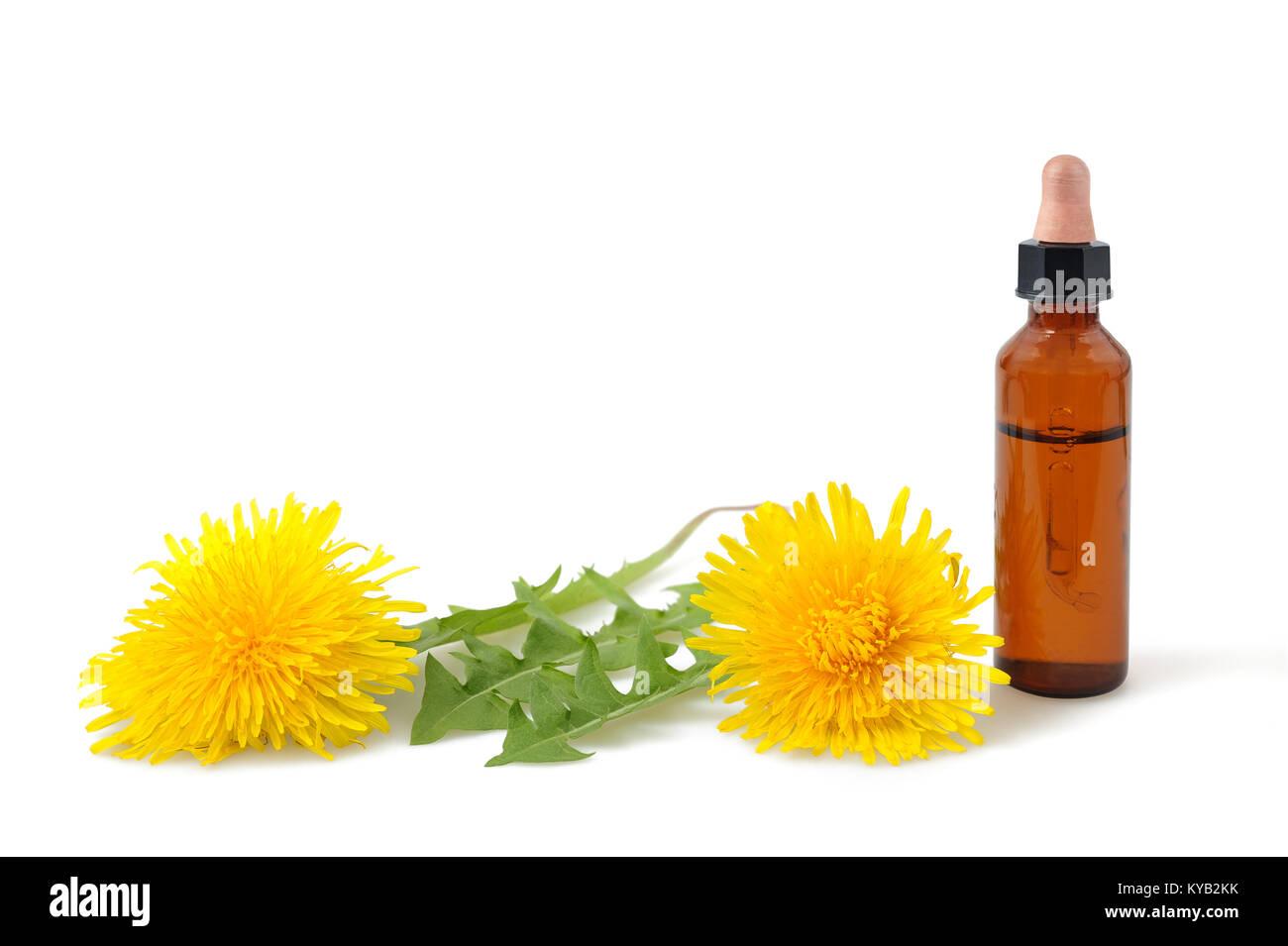 Löwenzahn Blumen und Flasche mit Wesen auf weißem Hintergrund Stockbild
