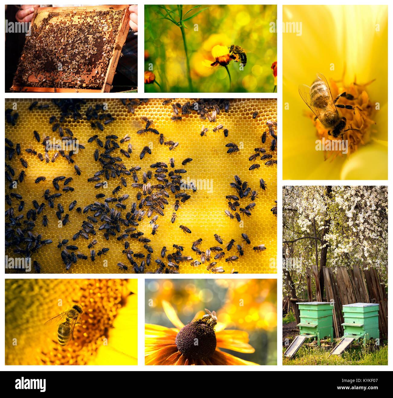 Biene Leben landwirtschaftliche Collage aus mehreren Bildern Stockfoto