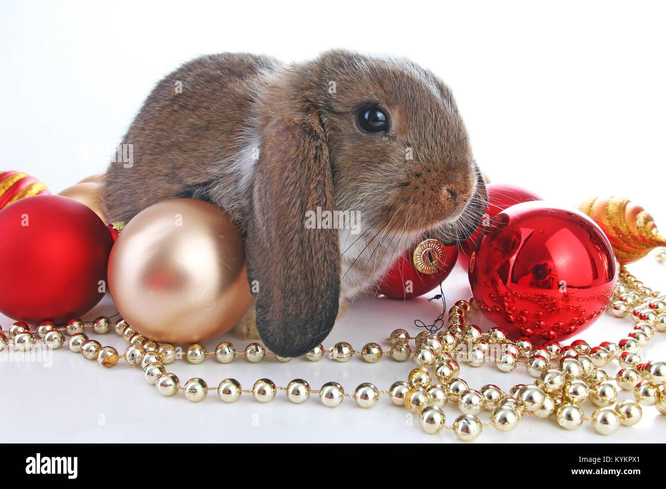 Bilder Weihnachten Tiere.Weihnachten Tiere Süße Weihnachten Kaninchen Kaninchen Bunny Lop