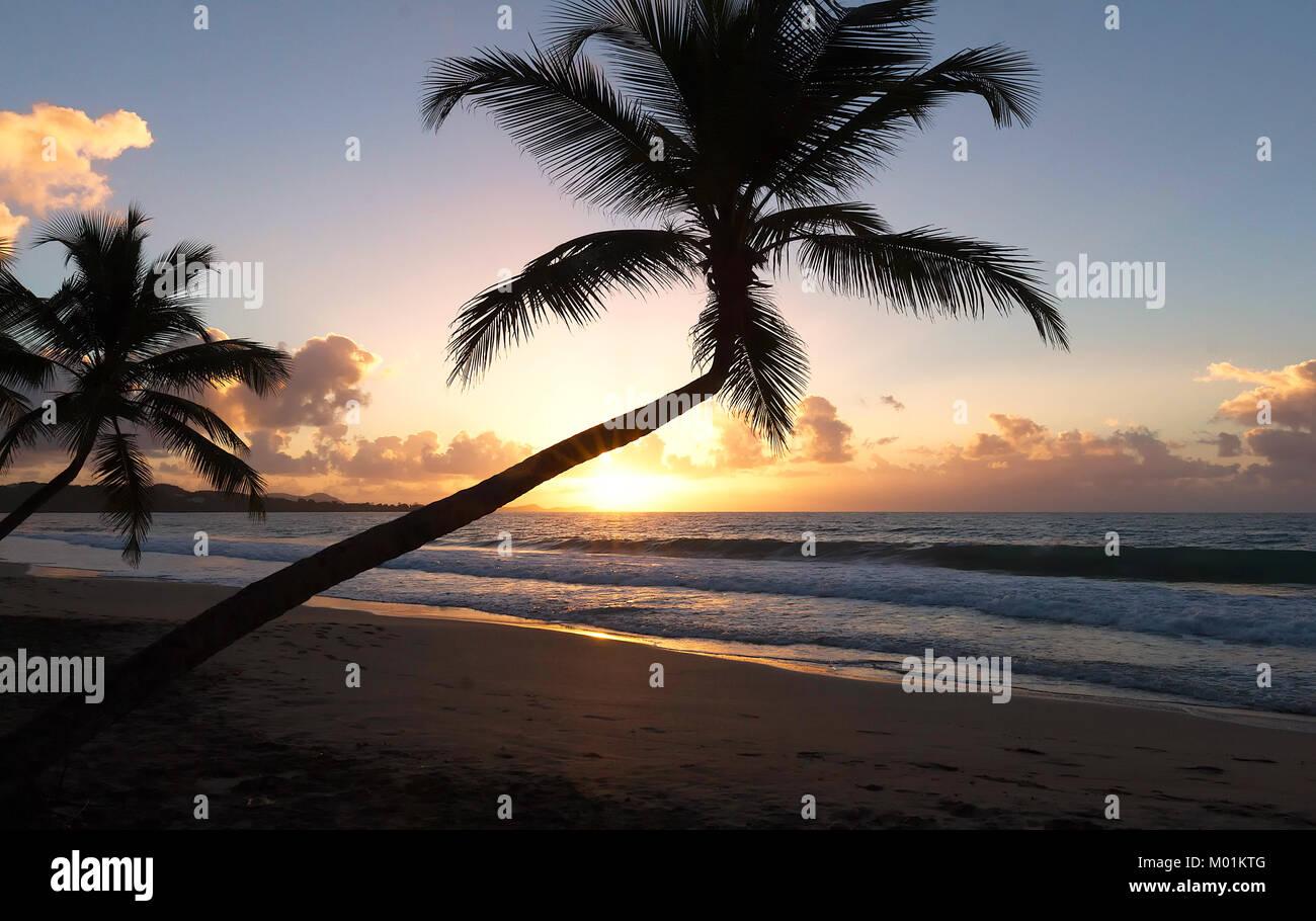 Sonnenuntergang, Paradise Strand und Palmen, Martinique Insel. Stockbild