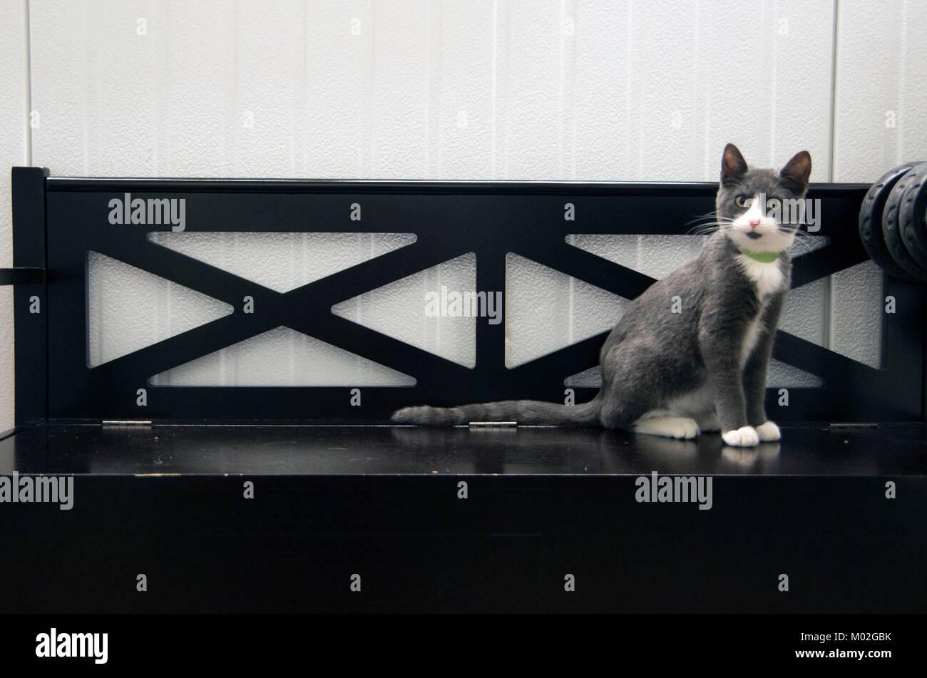Eine Katze sitzt auf der Bank im Tierheim. Stockbild