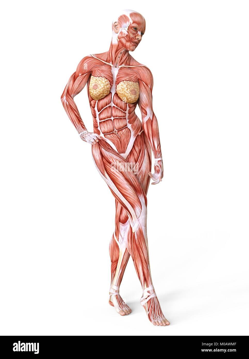 Gemütlich Bild Von Innen Weiblichen Körper Ideen - Menschliche ...