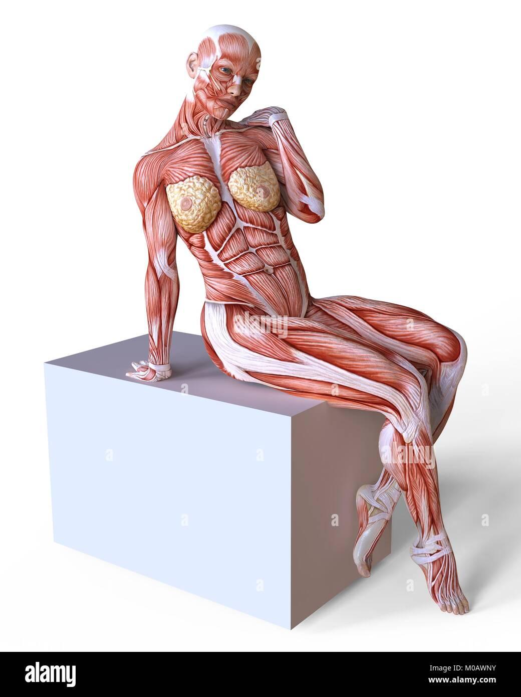 Tolle Bild Des Weiblichen Körpers Zeigt Organe Galerie - Menschliche ...