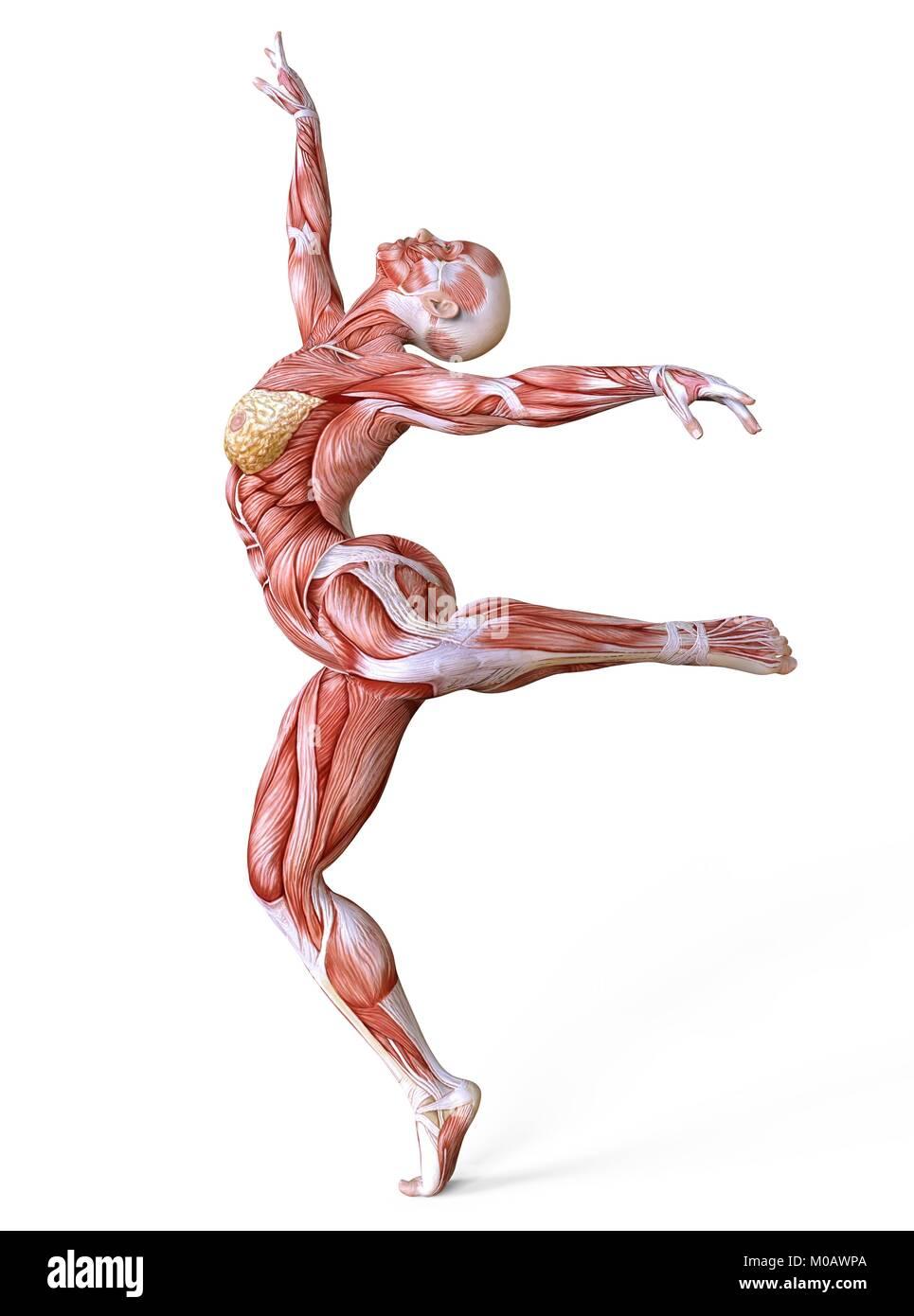 Ziemlich Muskeln Des Körpers Markierten Galerie - Anatomie Ideen ...