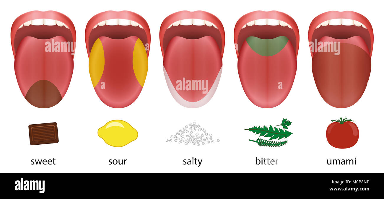 Zunge mit fünf Geschmack, süss, sauer, salzig, bitter und umami von ...