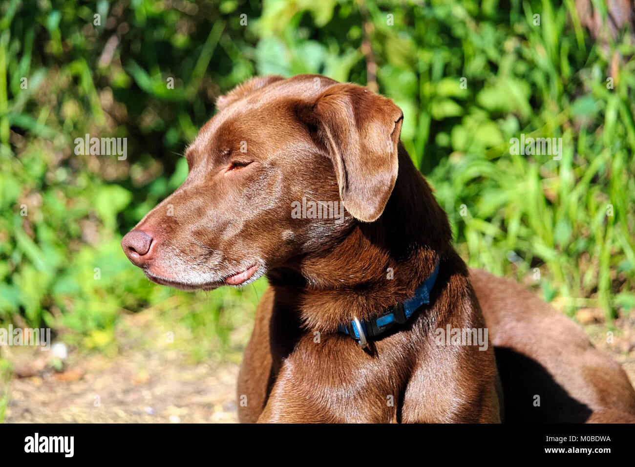 Eine Seitenansicht eines gemischten Rasse Hund an der Seite suchen Stockbild