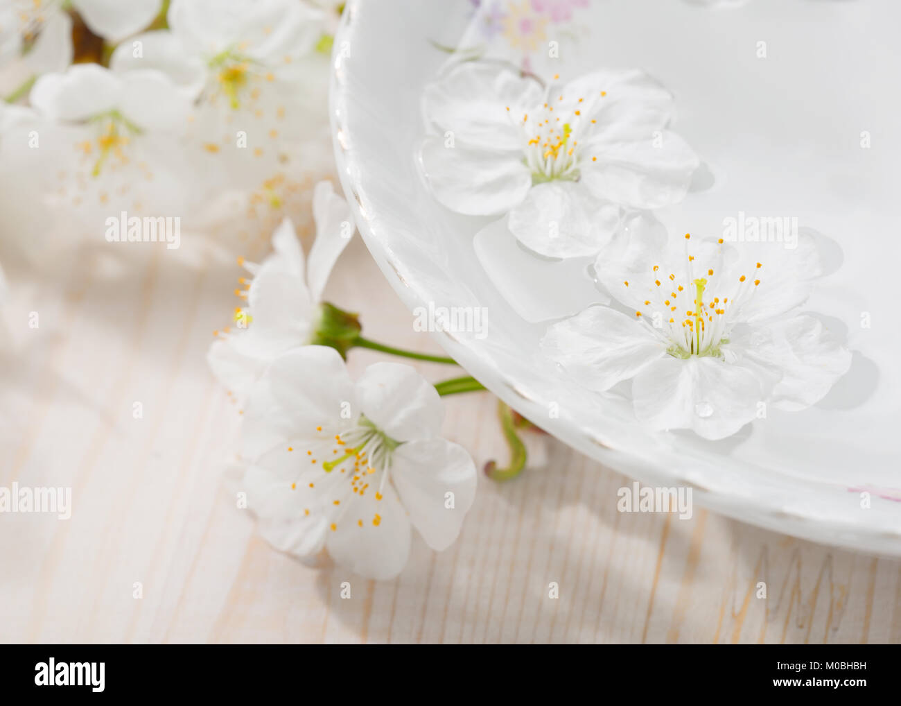 Schwimmenden Blumen (Kirschblüte) in Weiß Schüssel. Fokus auf in der Nähe von Blume Stockbild
