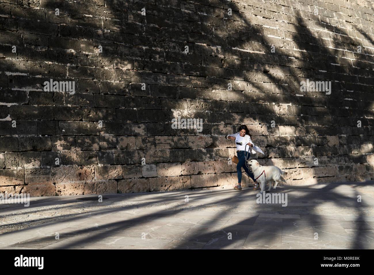 Sehr trendy Mädchen und goldenen Hund zusammen laufen unter Palmen Schatten im Sommer. Stockbild