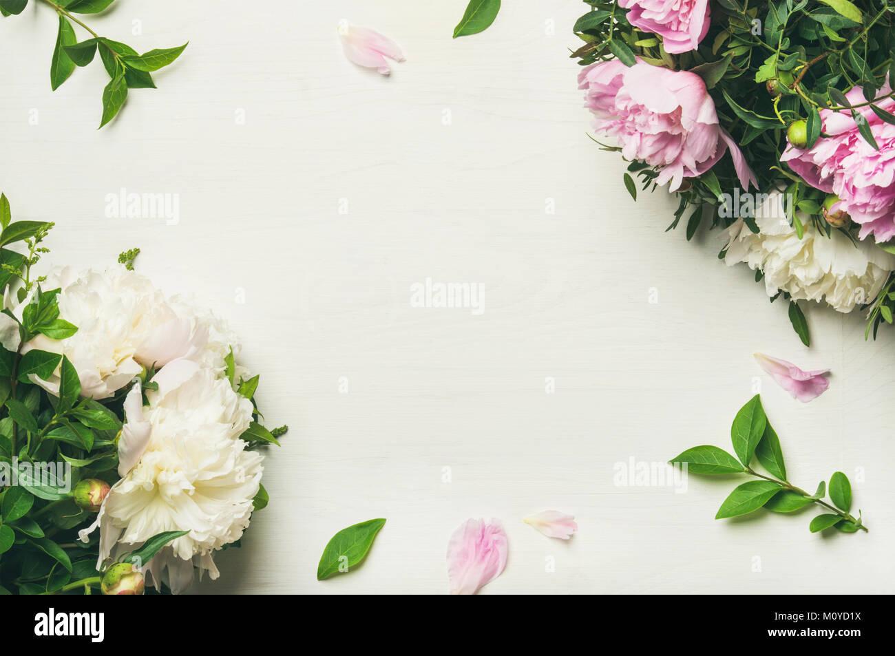 Frühling Blumen Layout mit Blumen. Flachbild-lay von zart rosa und weißen Pfingstrosen auf weißem Hintergrund, Ansicht von oben, kopieren. Tag der Frauen, Valentines Stockfoto