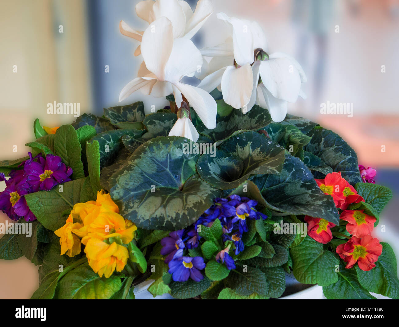 The Arrival Of Spring Stockfotos & The Arrival Of Spring Bilder - Alamy