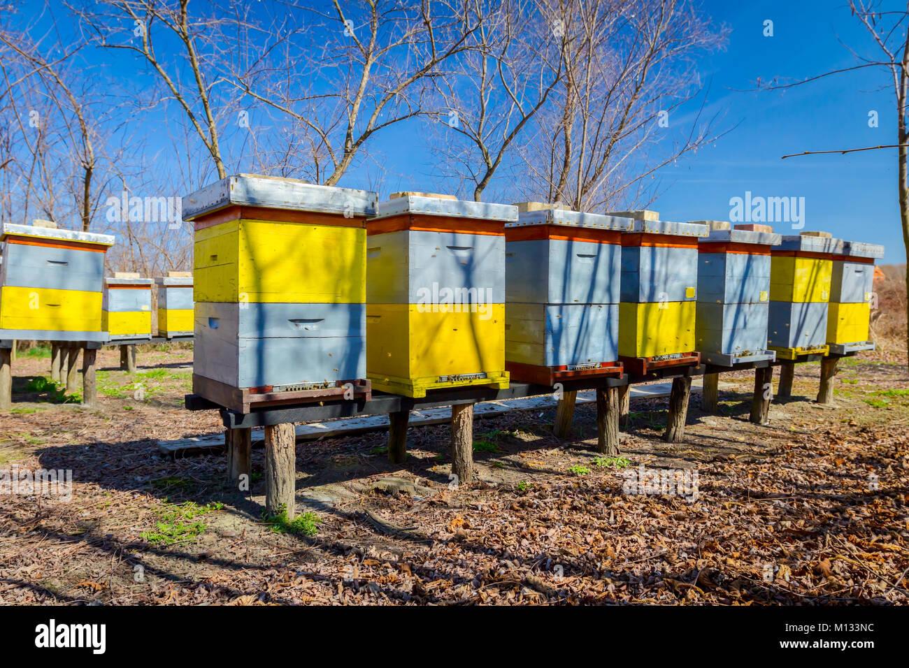 Holz Bunte Bienenstocke In Einer Reihe Werden Auf Holzkonstruktion