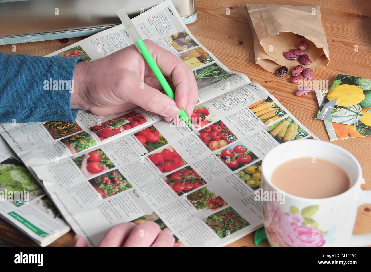 Männliche Gärtner bereitet den Samen von der Gartenarbeit Kataloge im Winter zu bestellen (Januar), in Stockbild