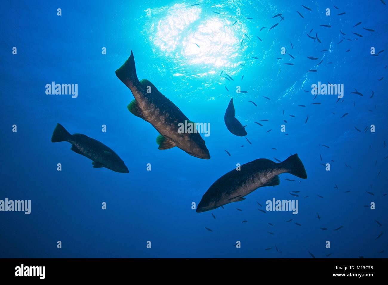 Grouper uk datiert Online-Dating Small Talk