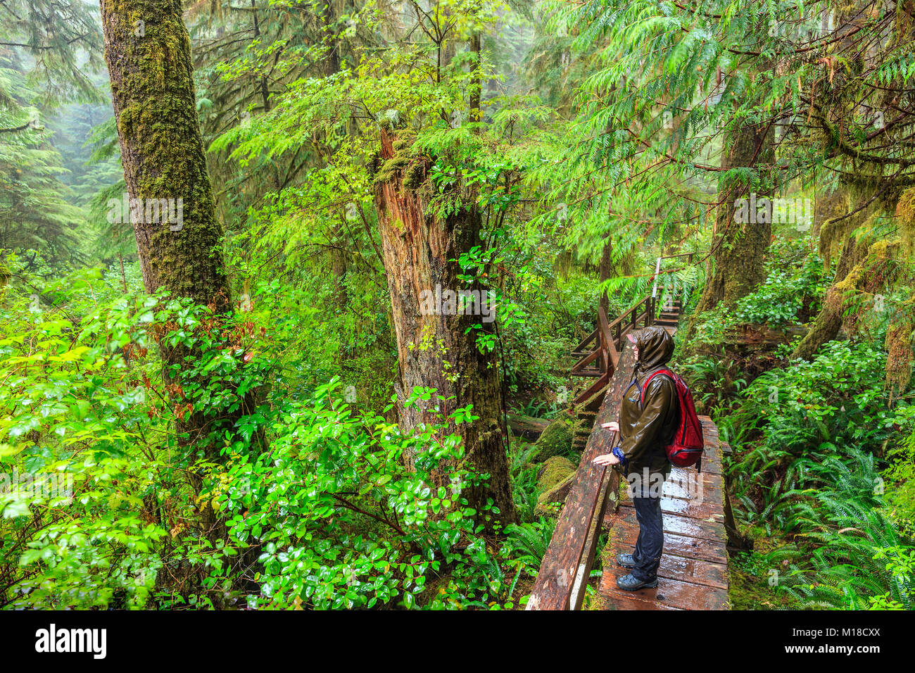 Frau Wandern im Regenwald Trail, Pacific Rim National Park, Vancouver Island, British Columbia, Kanada. Stockbild