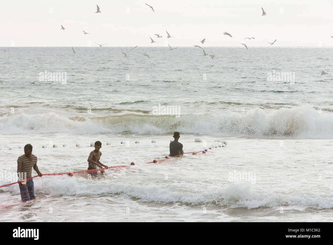 Akurala Strand, Sri Lanka - Dezember 2015 - einheimische Fischer, die Haspel in einem riesigen Netz, das ist eine Stockfoto