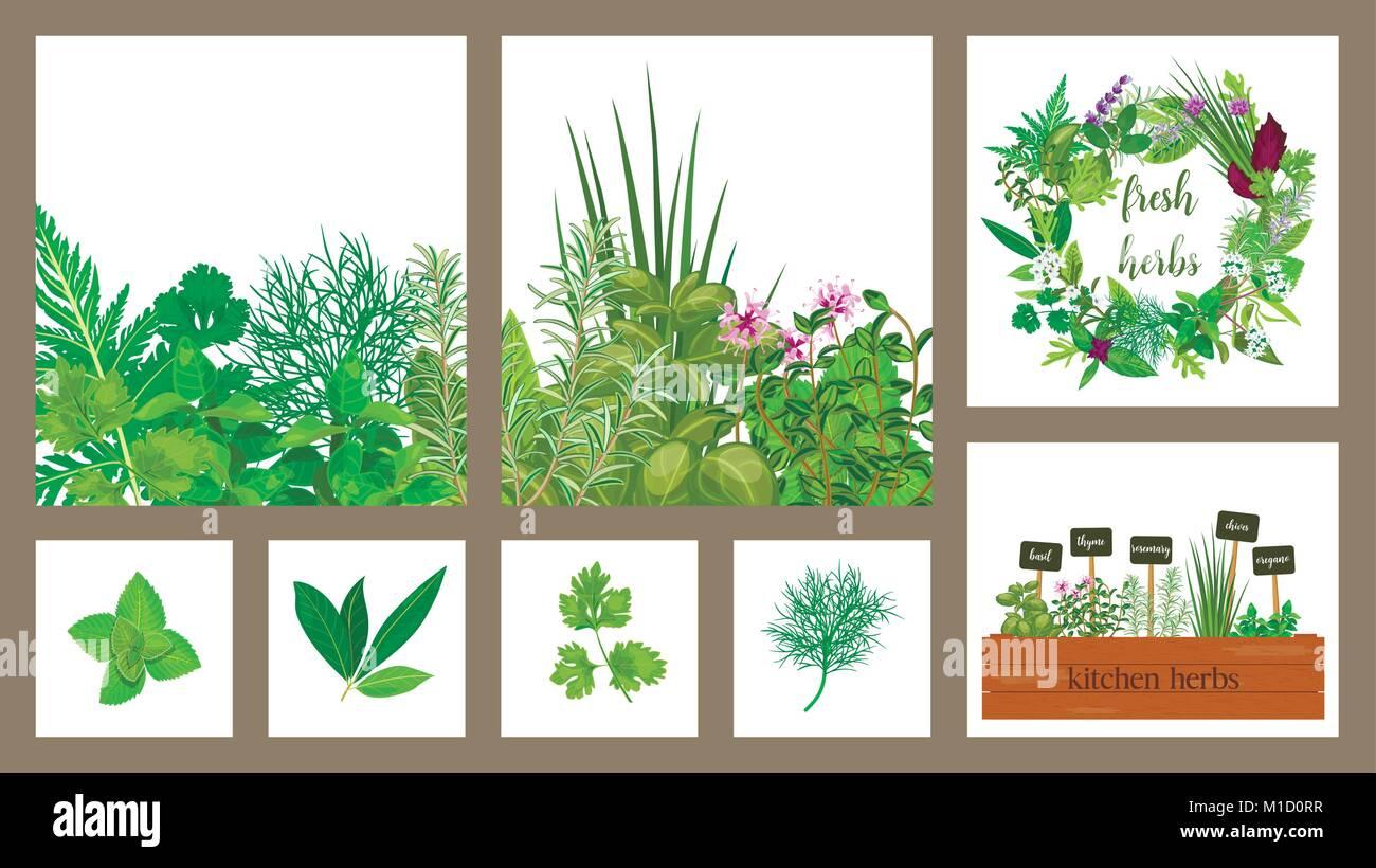 Holzkiste der Farm Fresh kochen Kräuter in der Holzkiste. Satz von Karten. Im Garten arbeiten. Hydroponik Stock Vektor