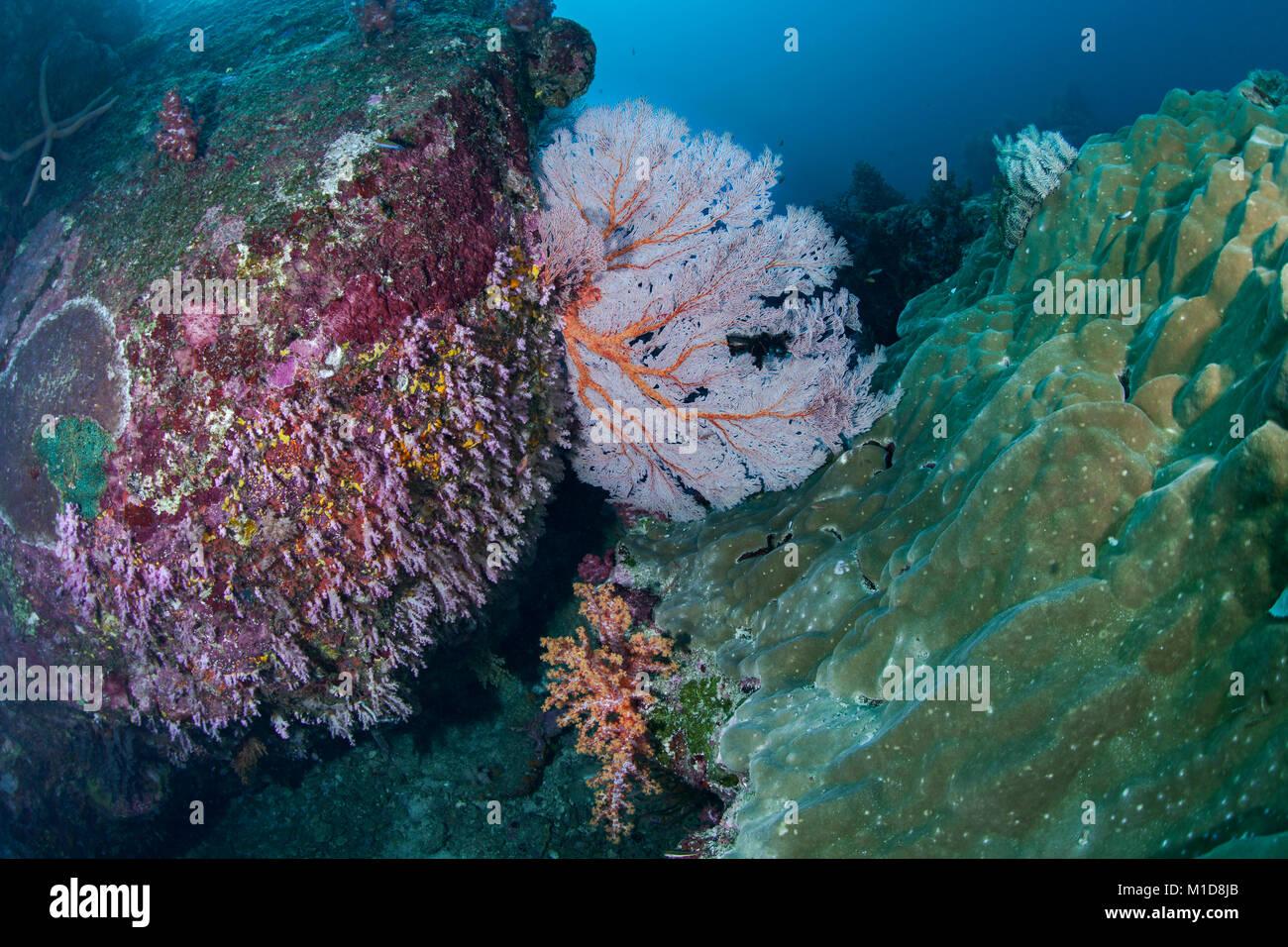 Coral Reef bei Elephant Head Rock Tauchplatz in der Andaman Sea, Thailand. Dezember, 2017. Immer noch sehr schön, Stockbild