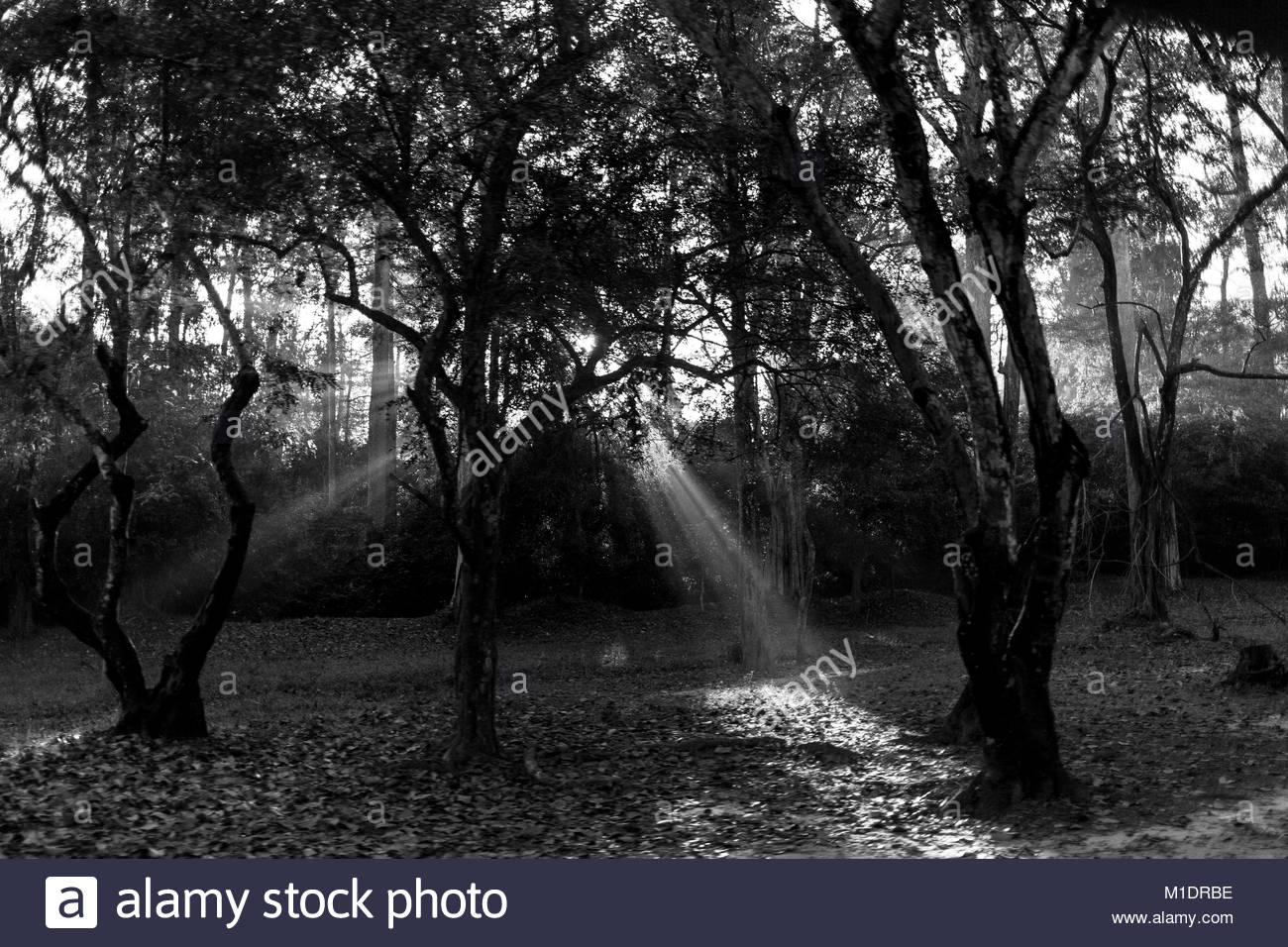 Suny Strahlen am Morgen in Angkor Wat Stockbild