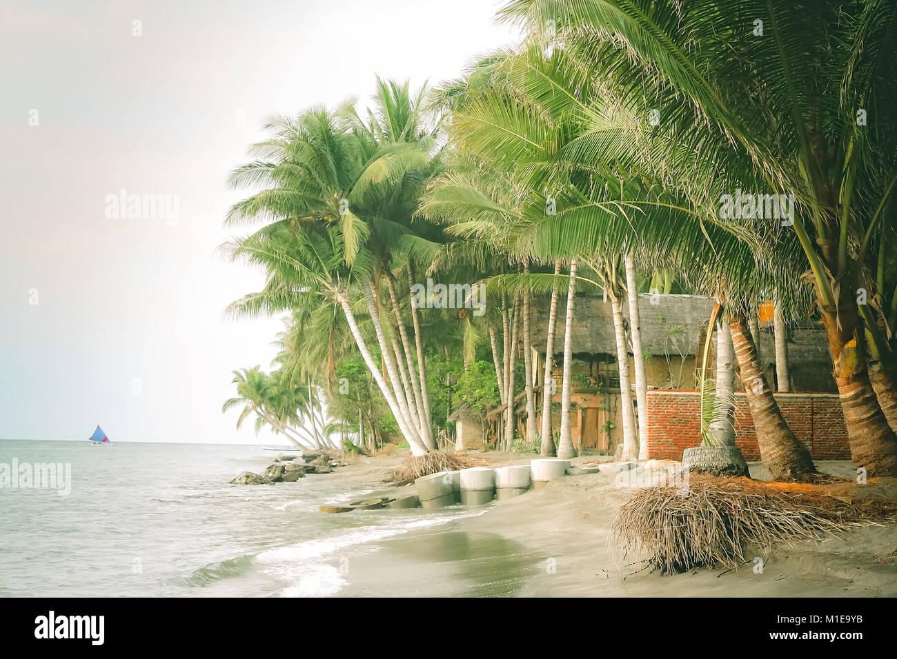 Palmen am Strand in einem kleinen Dorf auf der Insel Lombok, Indonesien, Asien Stockbild