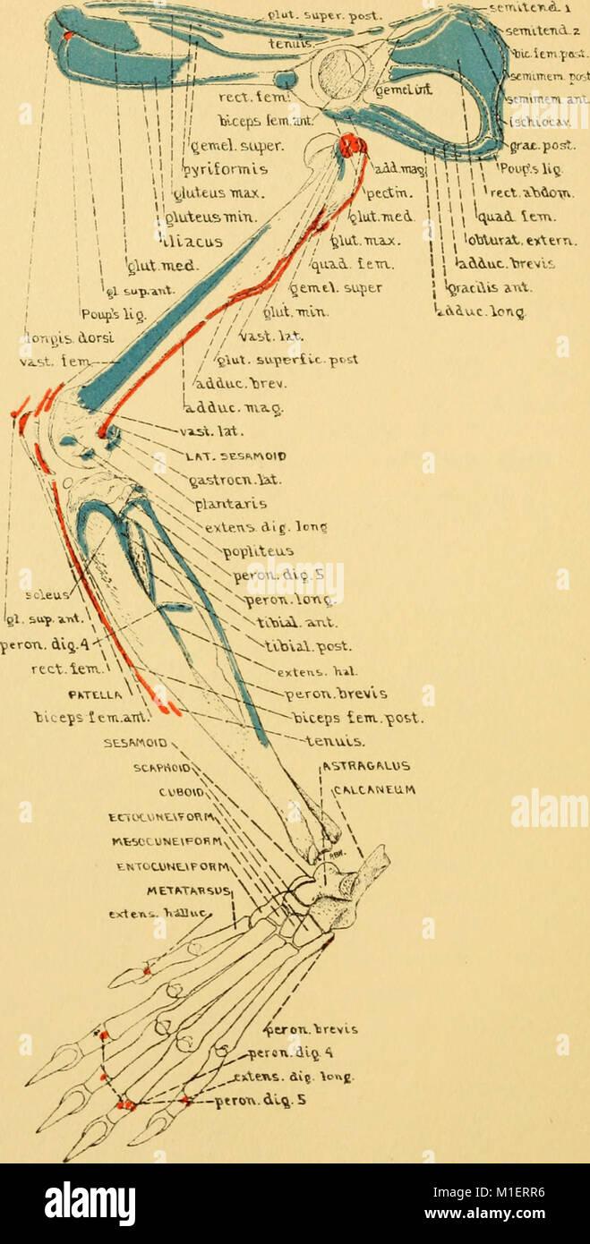 Großartig Ratte Anatomie Bilder Fotos - Menschliche Anatomie Bilder ...