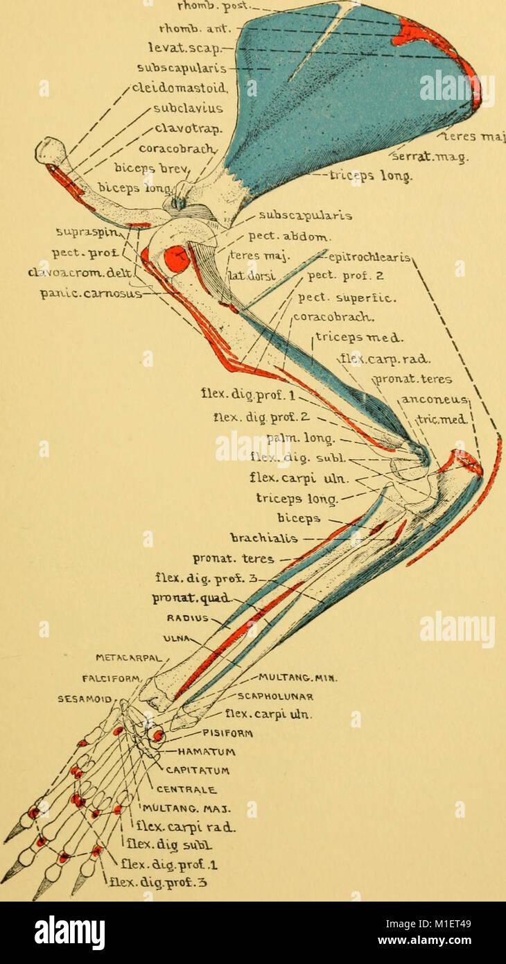 Ausgezeichnet Ratte Anatomie Diagramm Ideen - Anatomie Von ...