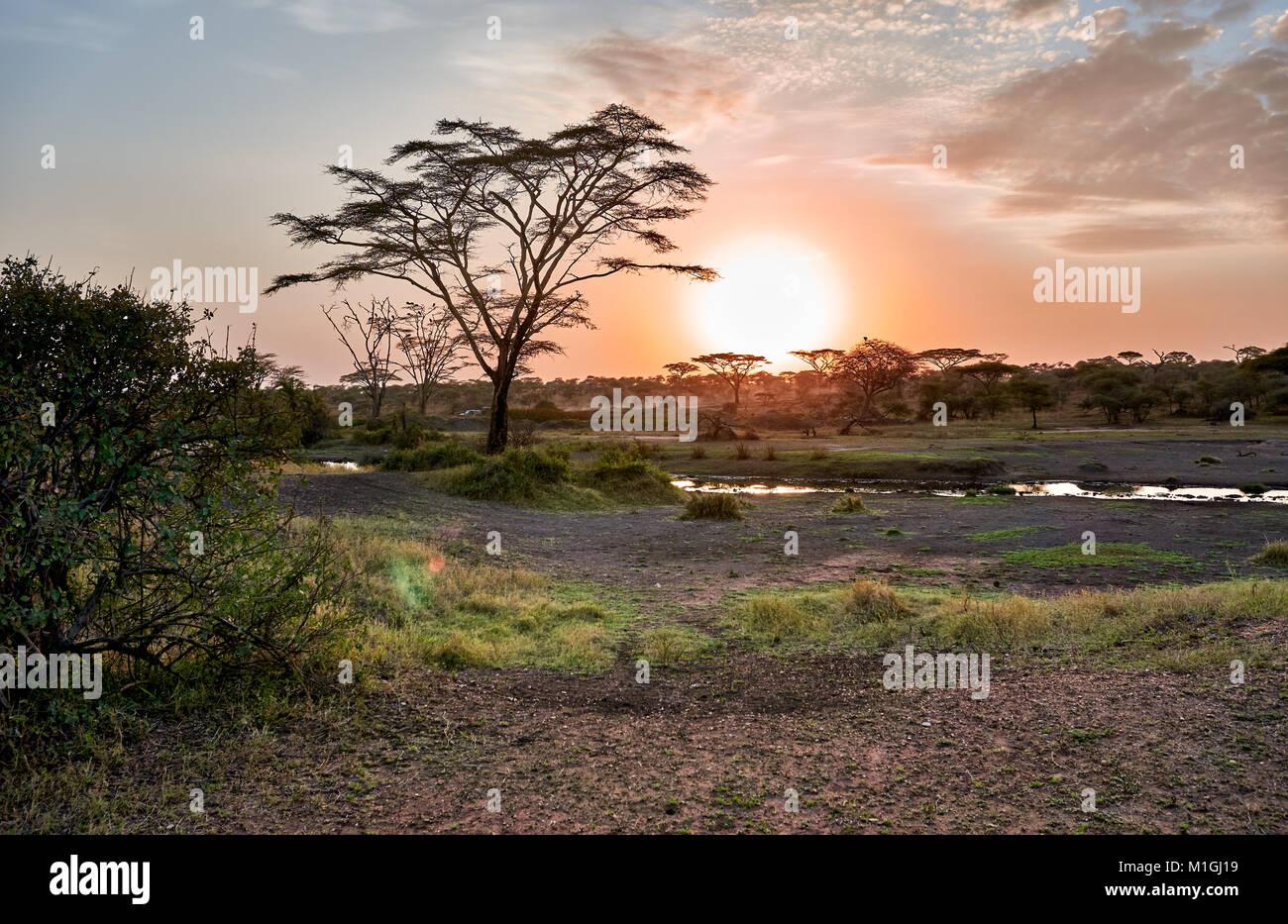 Sonnenaufgang in der Serengeti Nationalpark, UNESCO-Weltkulturerbe, Tansania, Afrika Stockbild