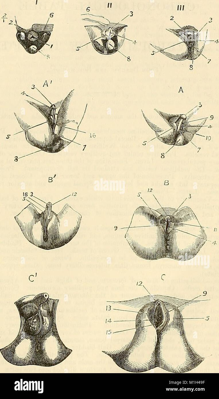 Surgical Textbook Stockfotos & Surgical Textbook Bilder - Alamy