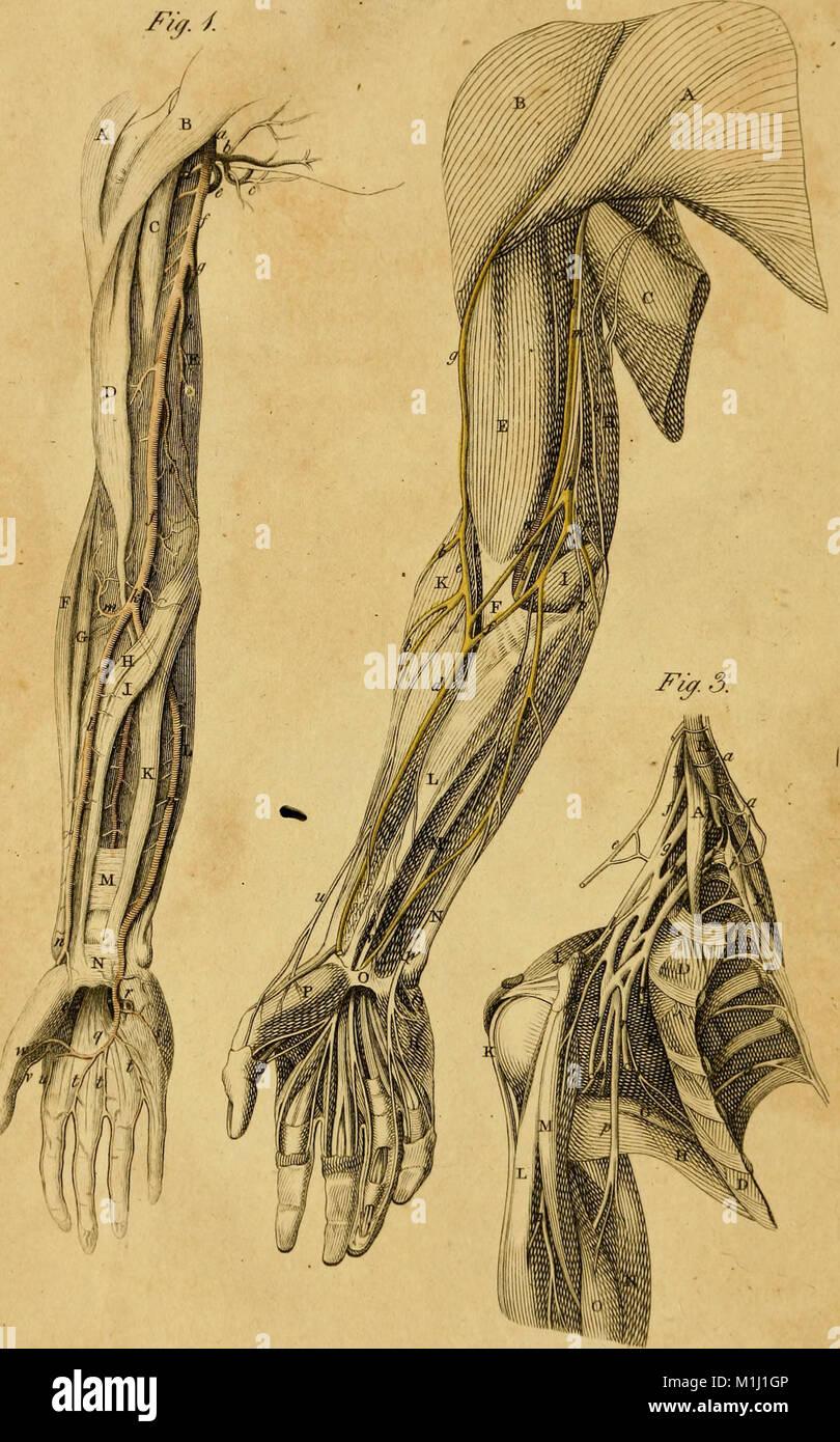 Atemberaubend Anatomie Und Physiologie Haupt Galerie - Menschliche ...