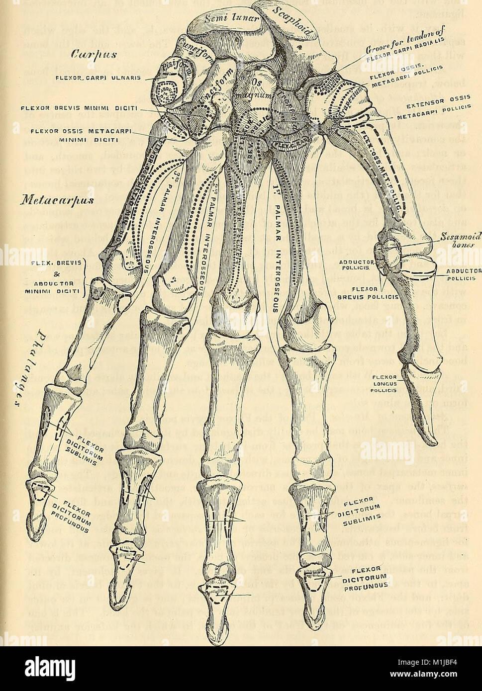 Fein Armvene Anatomie Ideen - Menschliche Anatomie Bilder ...