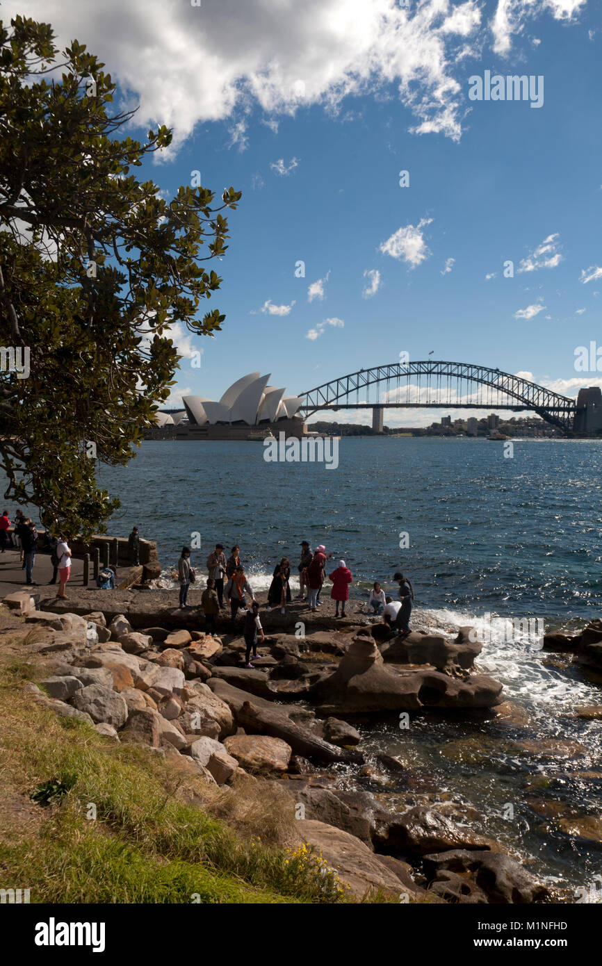 Mrs Macquaries point Sydney Harbour Sydney New South Wales, Australien Stockfoto