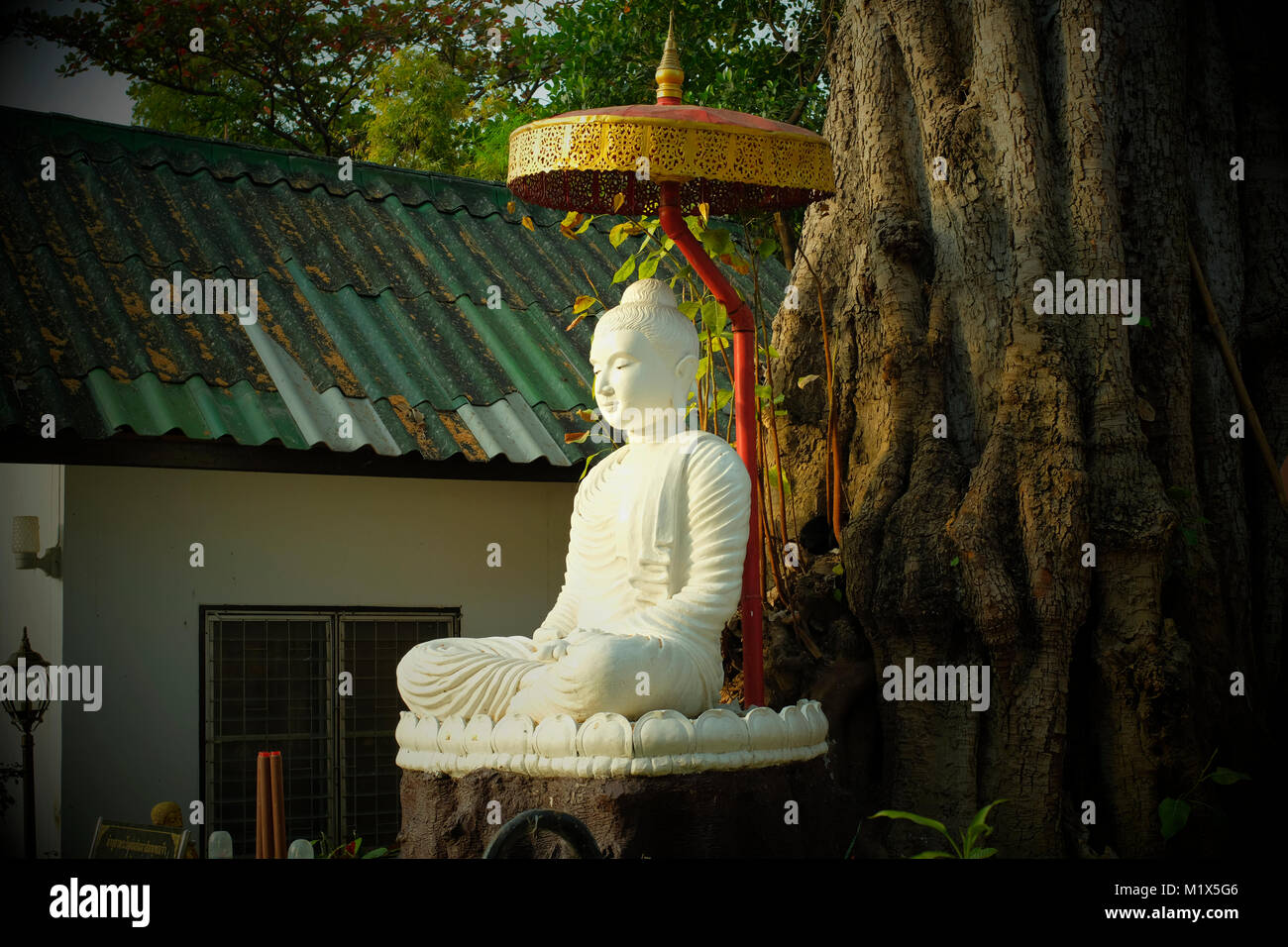 Ein Buddha Statue unter einem großen Baum in einem Tempel in Chiang Mai, Thailand. Stockbild